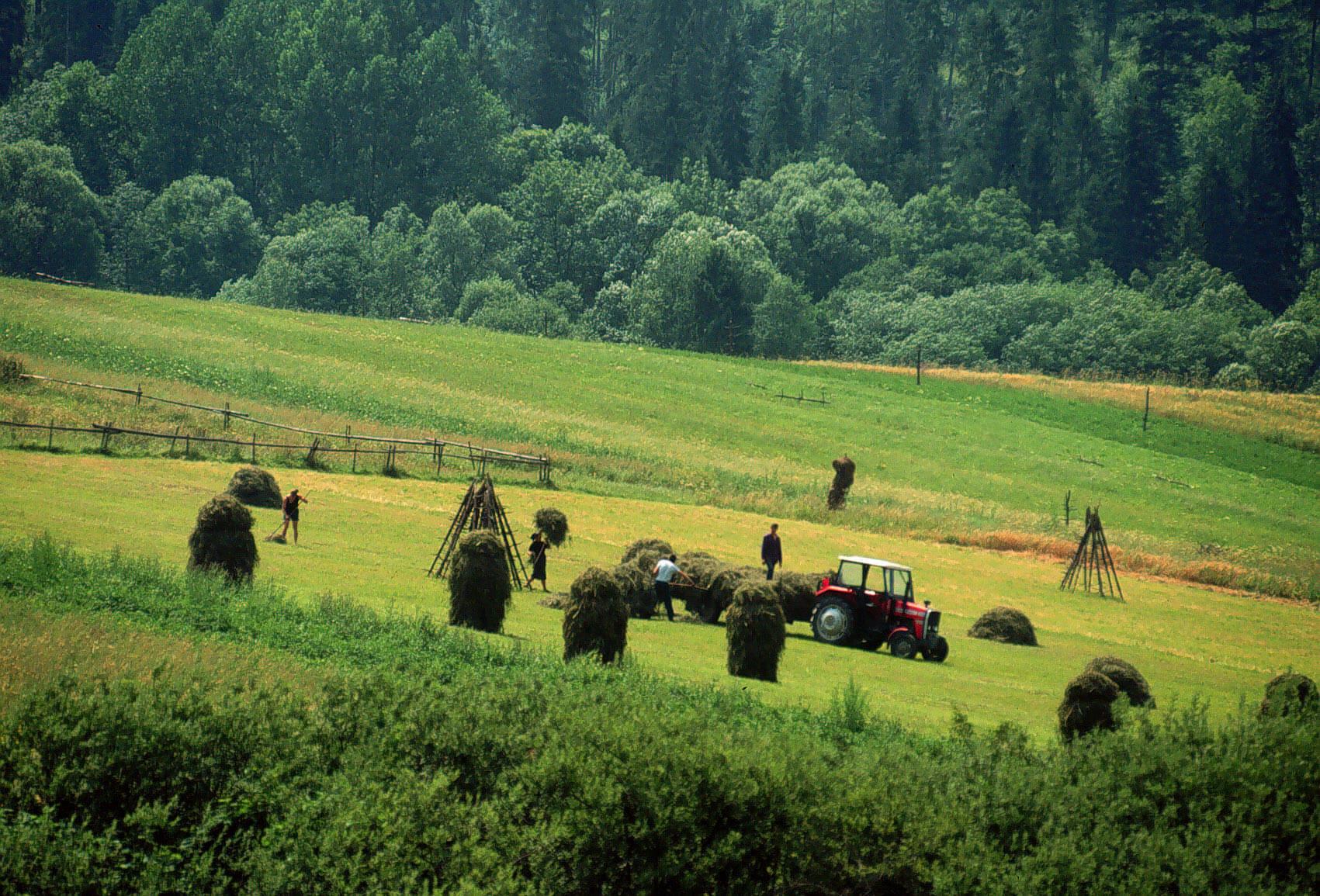 Обычная ферма в Европе