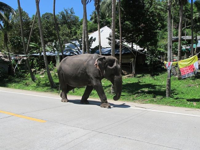 Самые глупые и самые смешные законы штатов США - слон на улице