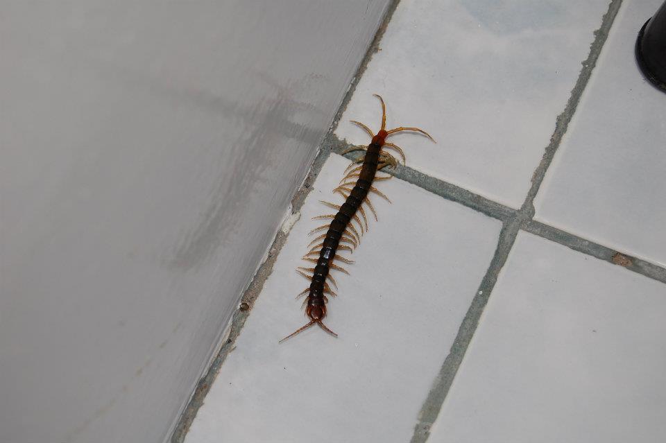 Филиппины — опасный райский уголок - насекомые в доме